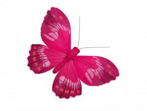 butterfly 30