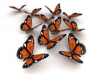 butterfly 37