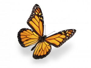 butterfly 39