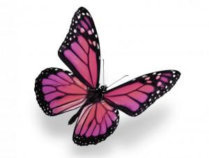butterfly 40