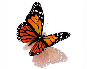butterfly 41