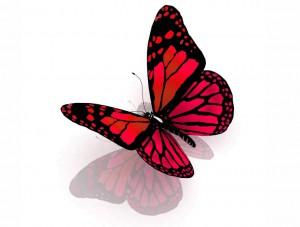 butterfly 42