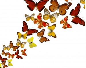butterfly 45