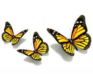 butterfly 47