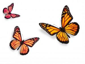 butterfly 49
