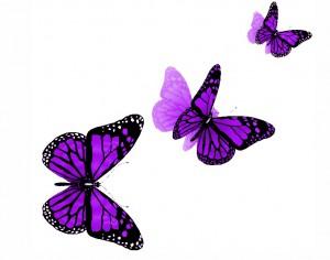 butterfly 50