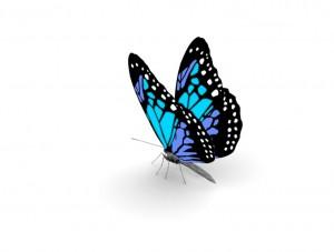 butterfly 51