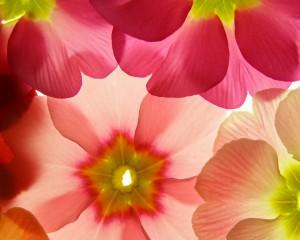 flower 105