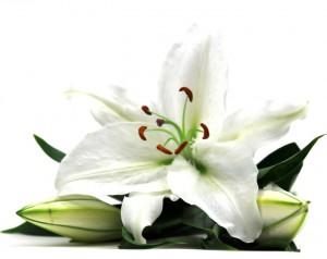 flower 44