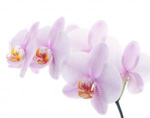 flower 53