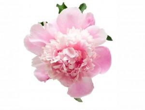 flower 58