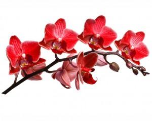 flower 59