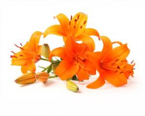 flower 61