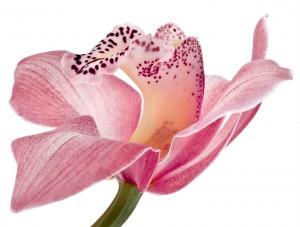 flower 64