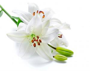 flower 68