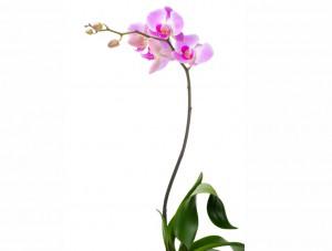 flower 69