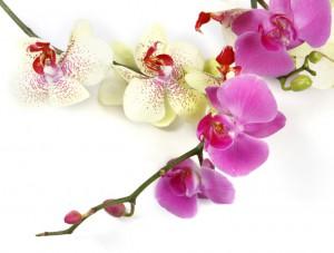 flower 70