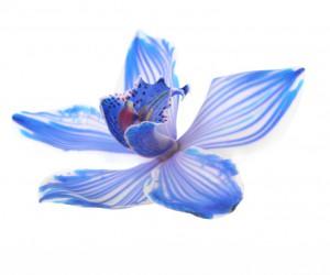 flower 74