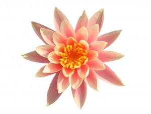flower 82
