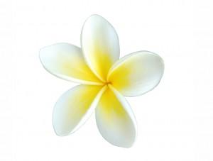 flower 84