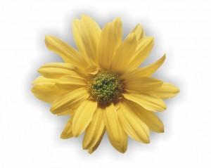 flower 86