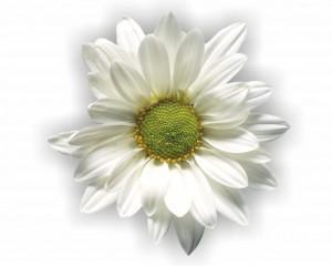 flower 87
