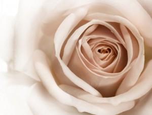 flower 90