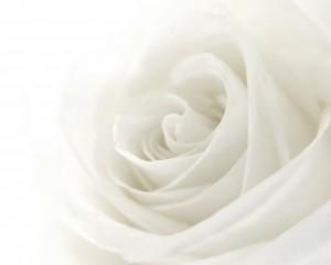 flower 96
