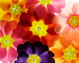 flower 97